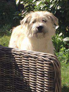 Dante, der Vereinshund